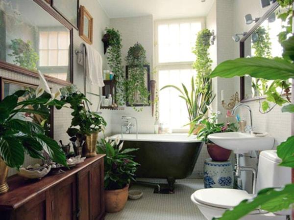 Những loài cây dành riêng cho phòng tắm