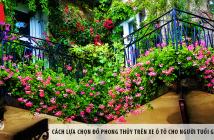 5 loại cây dễ trồng ở ban công chung cư
