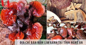 Địa chỉ bán nấm lim xanh tại tỉnh Nghệ An uy tín nhất