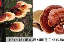 Địa chỉ bán nấm lim xanh tại tỉnh Quảng Bình uy tín, giá tốt